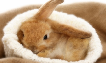 sleeping-bunny-jpg
