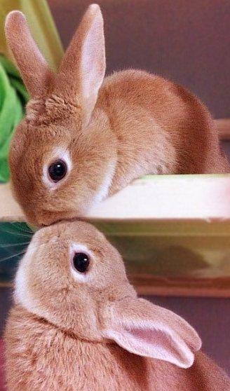 bunny_smooch