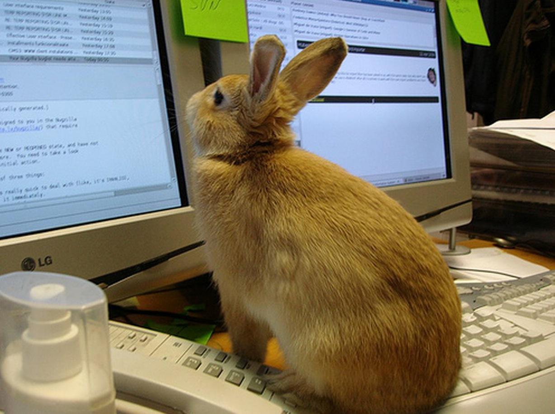 bunnycomputer