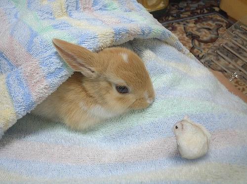 bunnyhamster