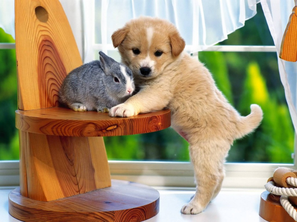 bunnypuppy